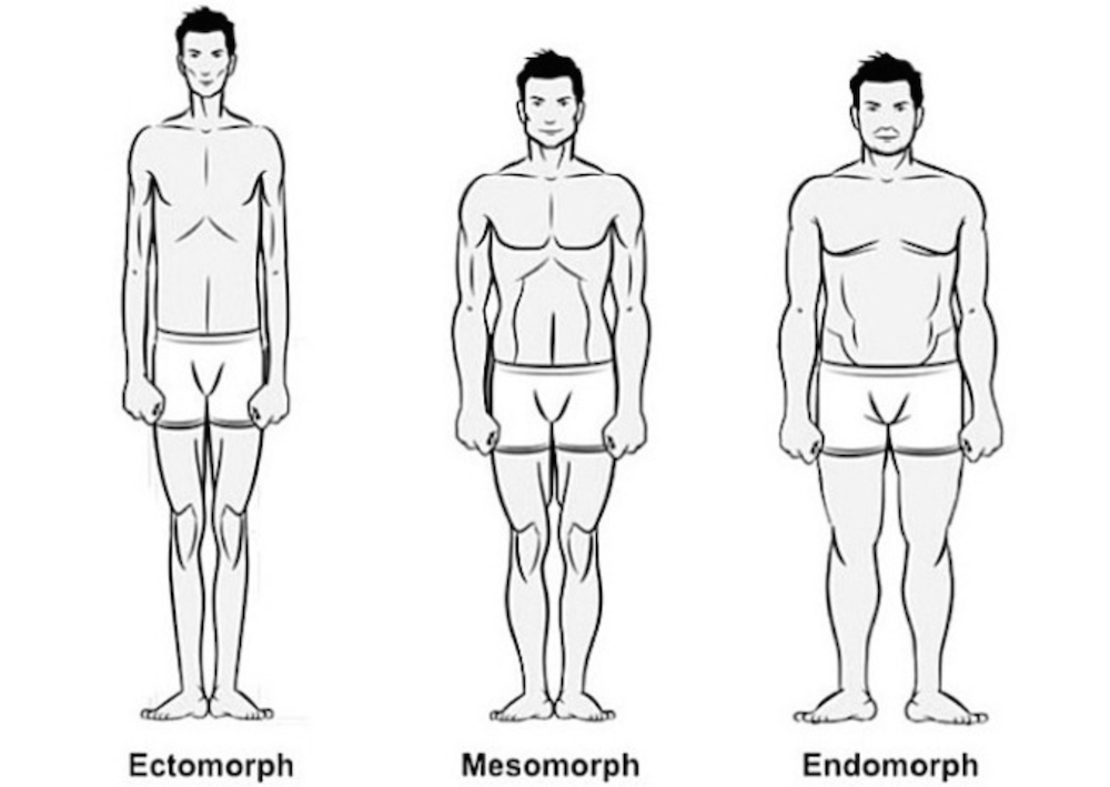 Body Type graphic: Ectomorph, Mesomorph, Endomorph